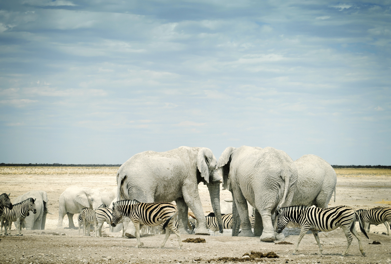 Zebras and African elephants in Etosha National Park, Namibia