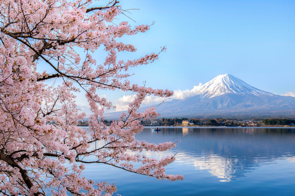 Sakura am Mount Fuji, Japan