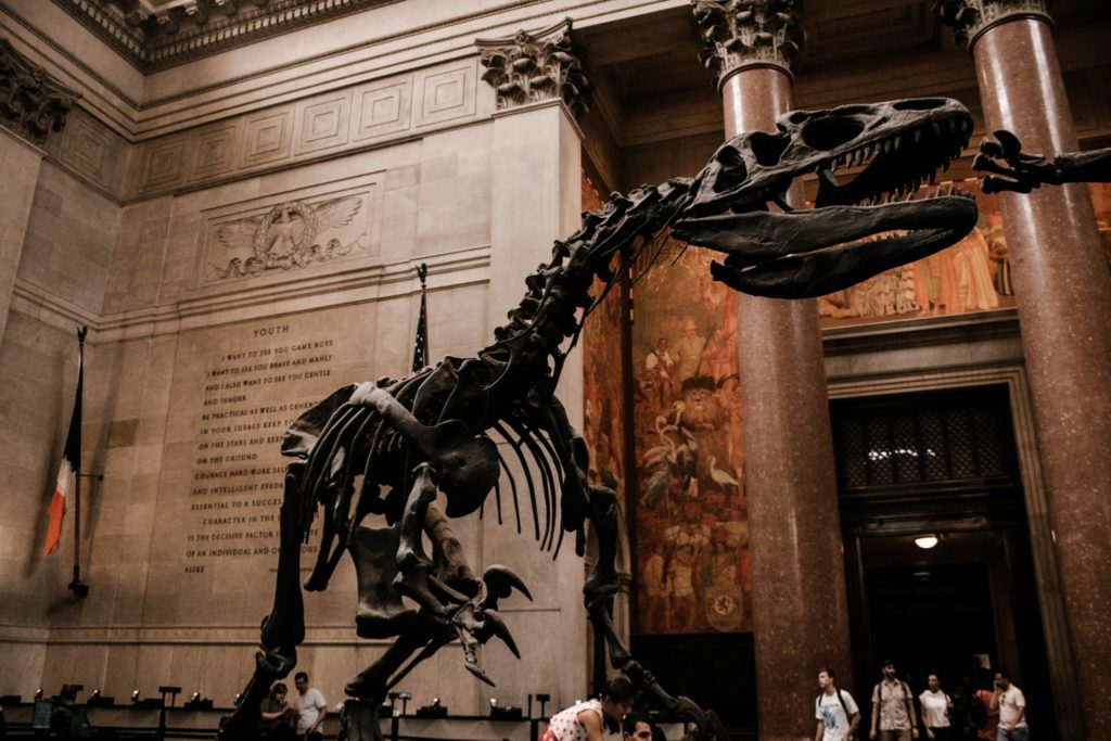 Das American Museum of Natural History