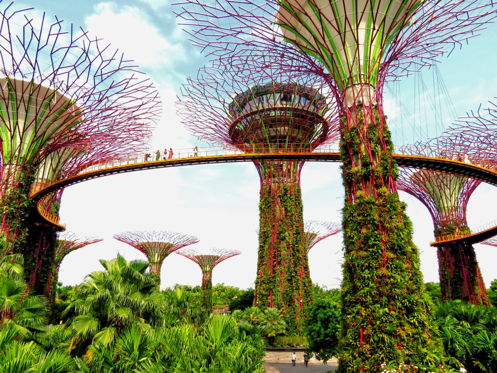 Die Supertrees in den Gardens by the Bay, Singapur