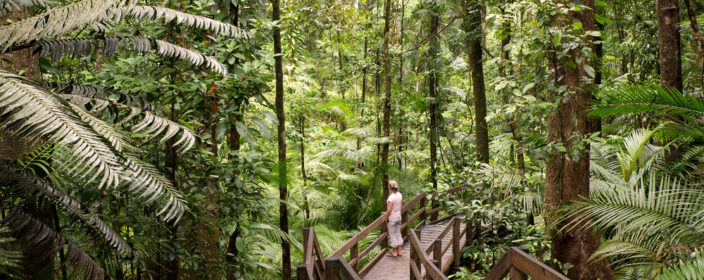Holzweg im Daintree Nationalpark, Australien