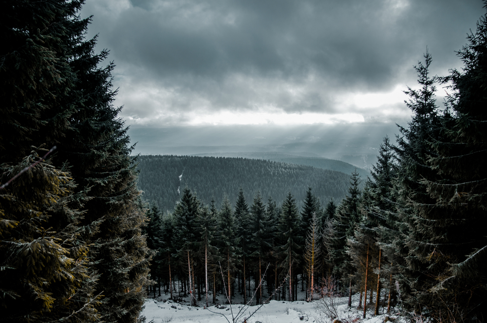 Harz im Winter